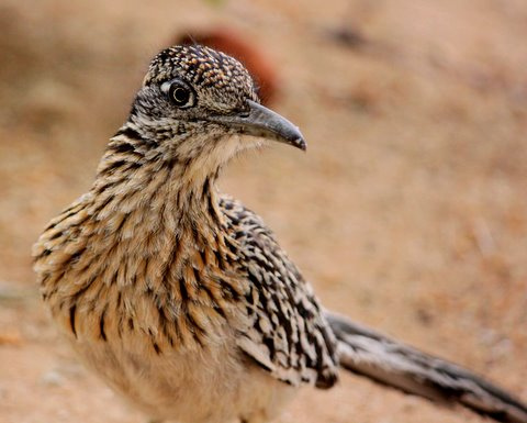 roadrunner re appears today